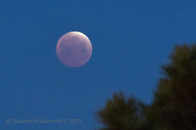 Blood Moon - Lunar Eclipse